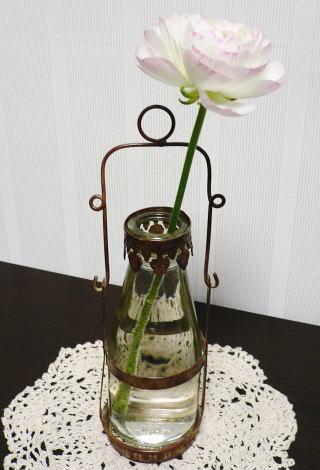 Ranunculus1
